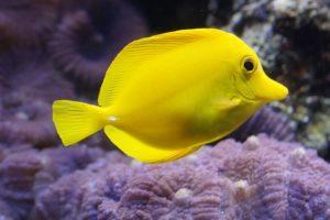 Tauchtauglichkeitsuntersuchung Lemonfisch